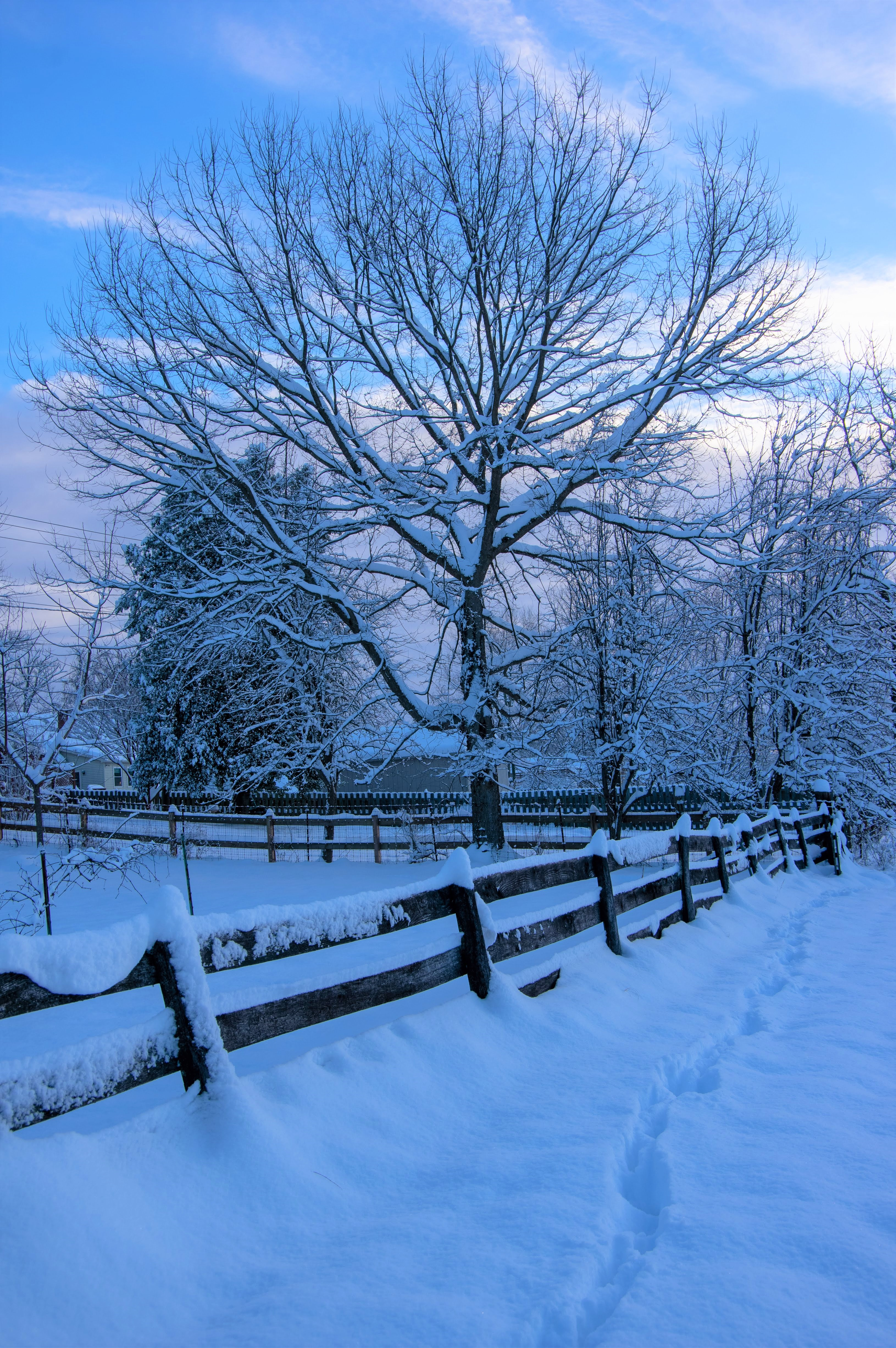 Snow Day Footprints