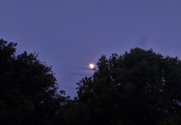 The woods and moon 3